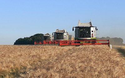 Getreideernte – Stand der Dinge